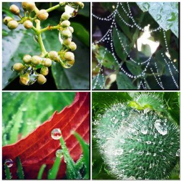 Regn, regn och regn…