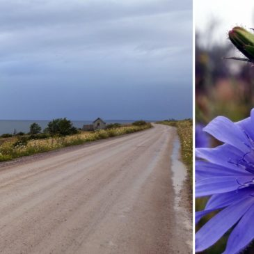 Bildregn från norra Öland…